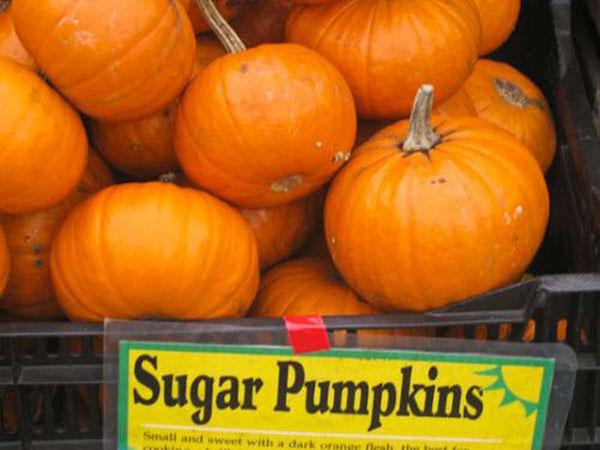 Sugar-Pumpkins