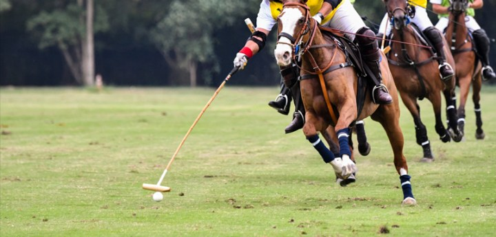 Group of athletes and horses during a polo match