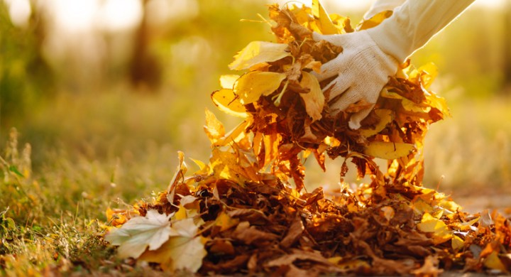 Collecting leaves outdoor as a fall activity