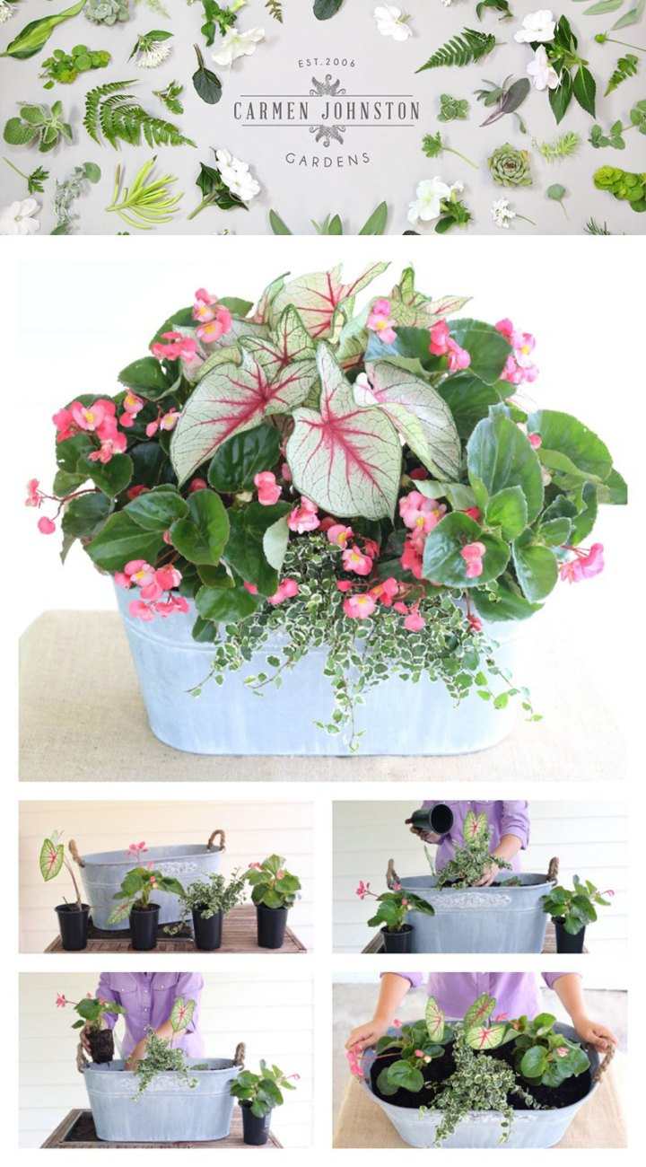 Carmen-Johnston-Gardens-Container-Garden-Tips