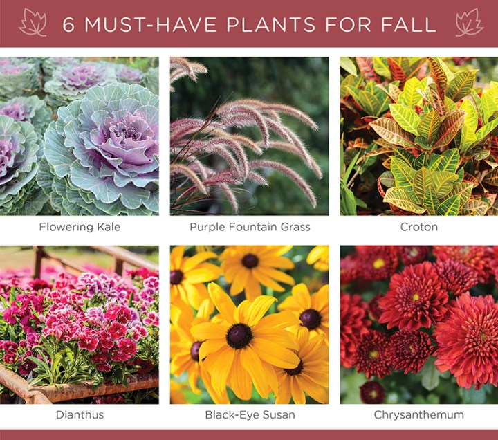 types of assorted plants for fall