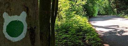 Zelený okruh – zajíc