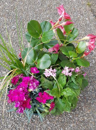 Coupe de plantes Fleurissement tombes Pompes Funèbres de l'Odet Pluguffan Quimper