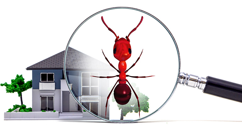 Build It and They Will Come: The Importance of Pest Inspections