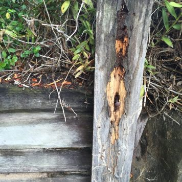 Untreated posts and sleepers