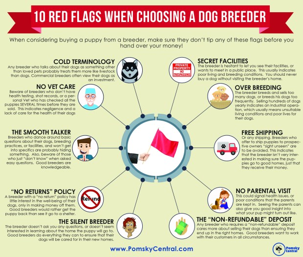 Selecting dog breeder