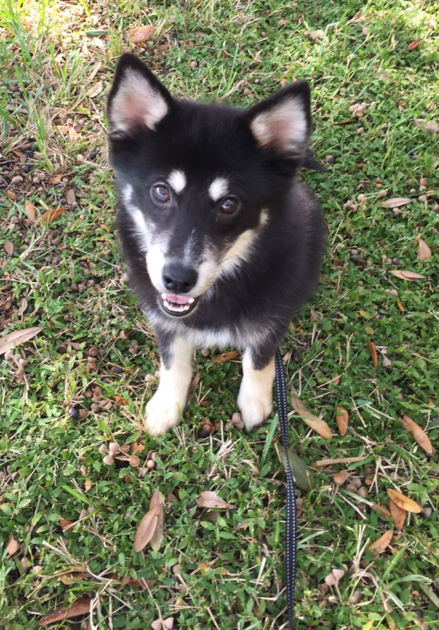 Alexande Hamilpup smiling on grass