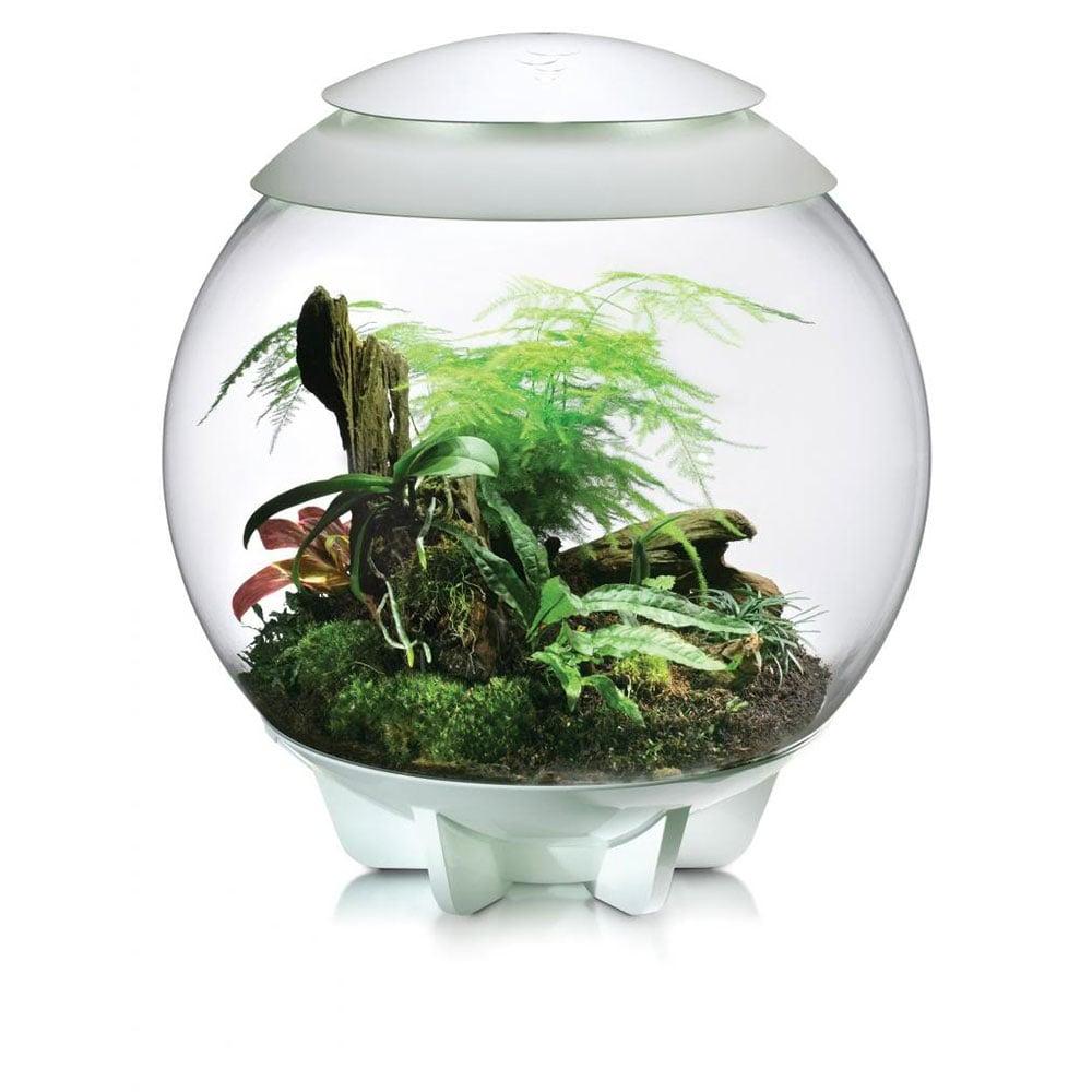 Where Buy Pond Plants Online