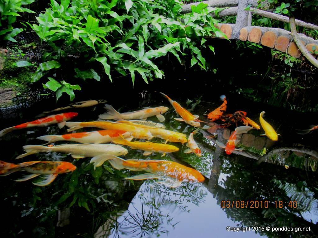 building a koi pond diagram softail wiring fish design drawing