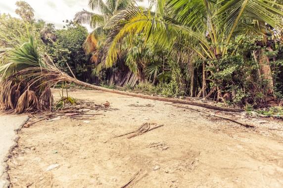 tulum_beach_roadside