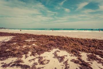 tulum_playa_pescadores_seaweed