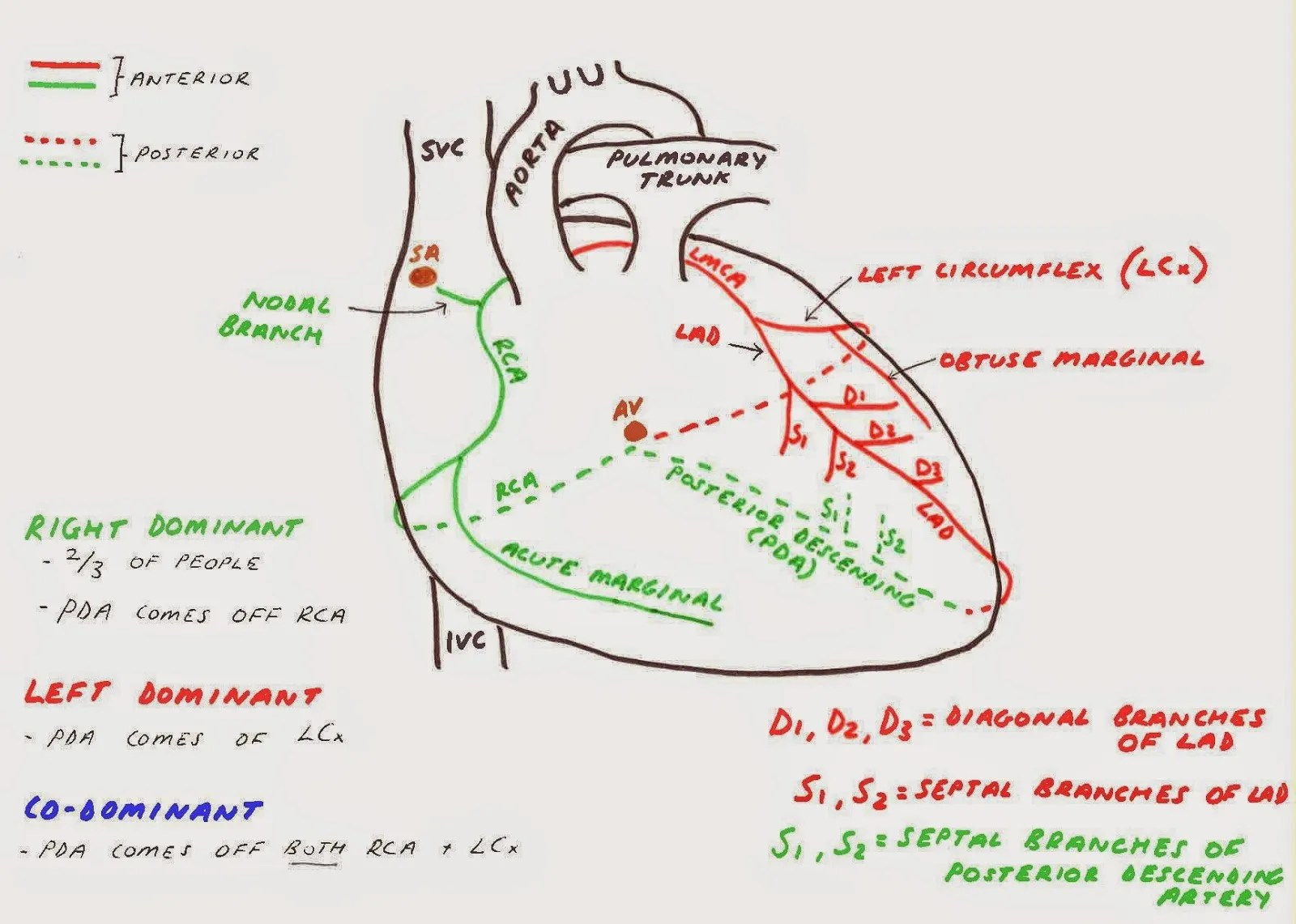 hight resolution of heart diagram