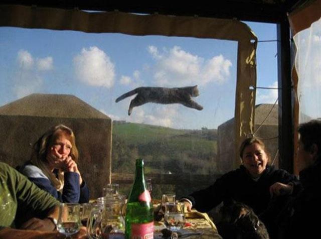 Photobombs Away: animal photobomb - flying feline