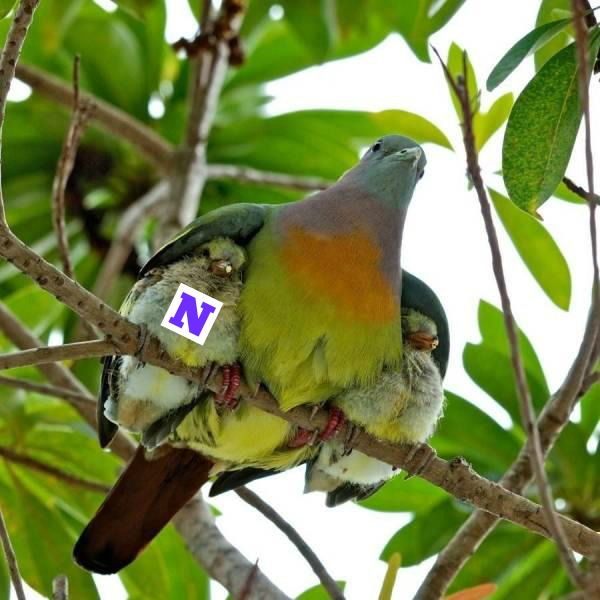 NU Baby Bird