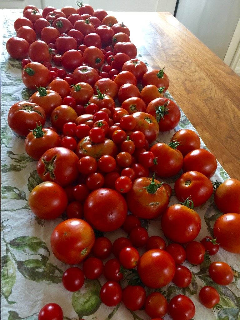 Freezer pasta sauce: The tomato plants are reproducing like bunnies.
