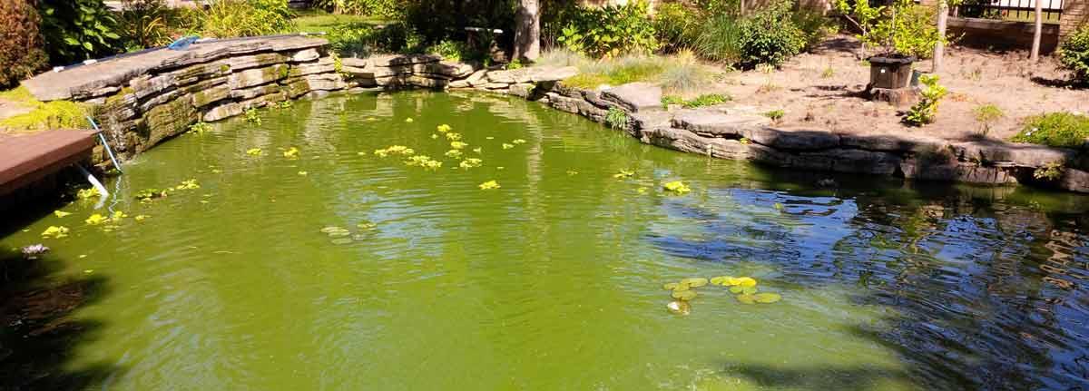 Koi Fish Pond Backyard