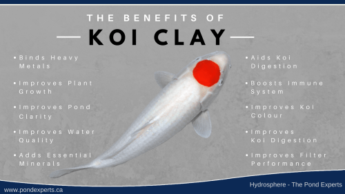 small resolution of the many benefits of montmorillonite koi clay