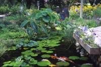 Pond Supplies-Aquascape Products-Live Pond Fish-Aquatic Plants