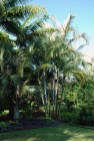 Palm in Corner