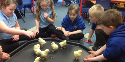 Fun and Games with our Feathery Friends