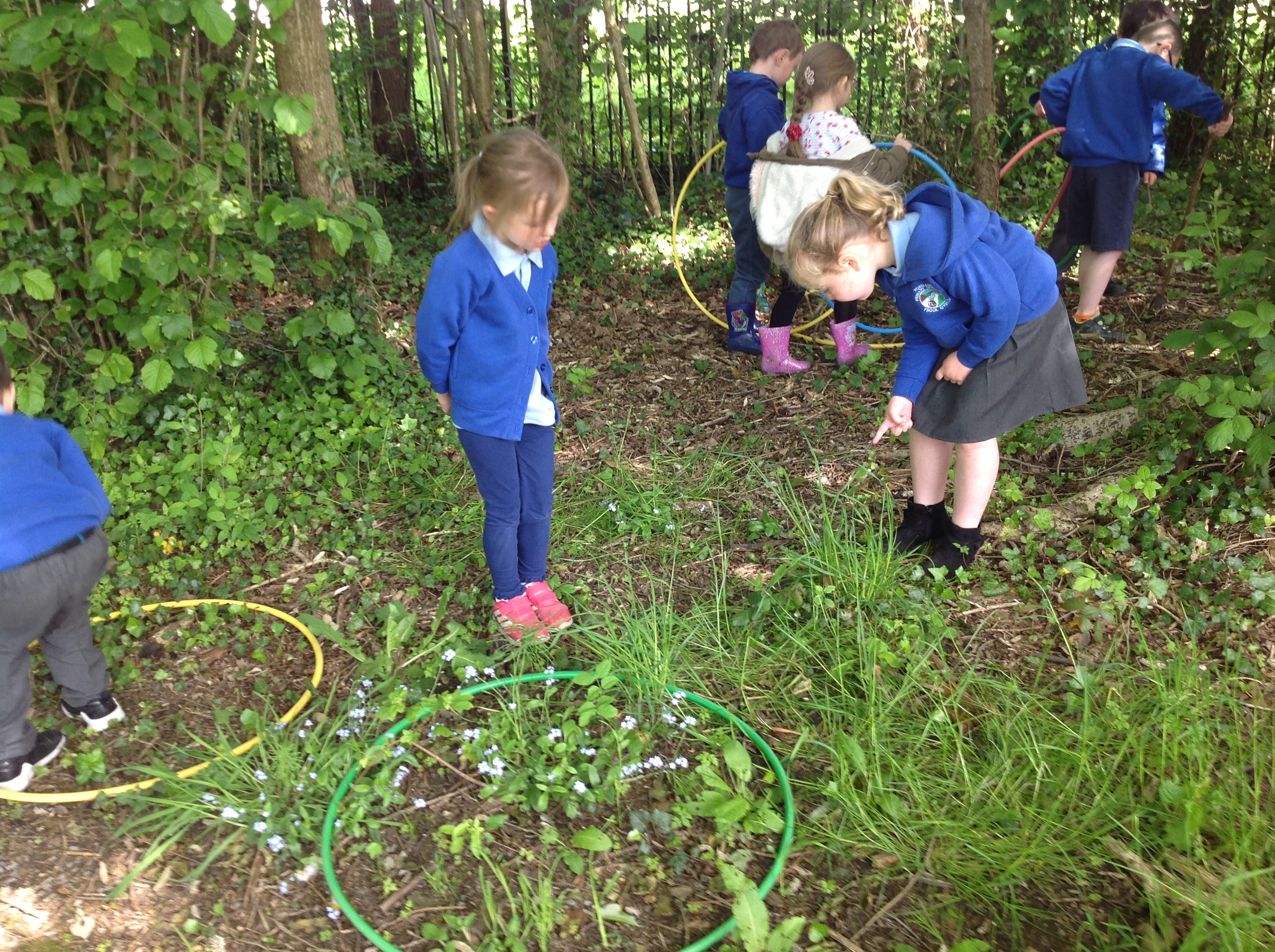 Mad about Minibeasts!