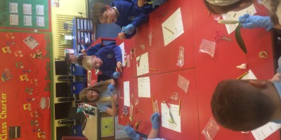 Year 3 Flower Dissection