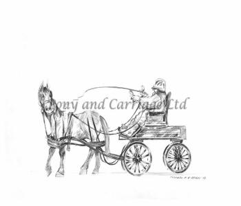 Horse Carriage Size