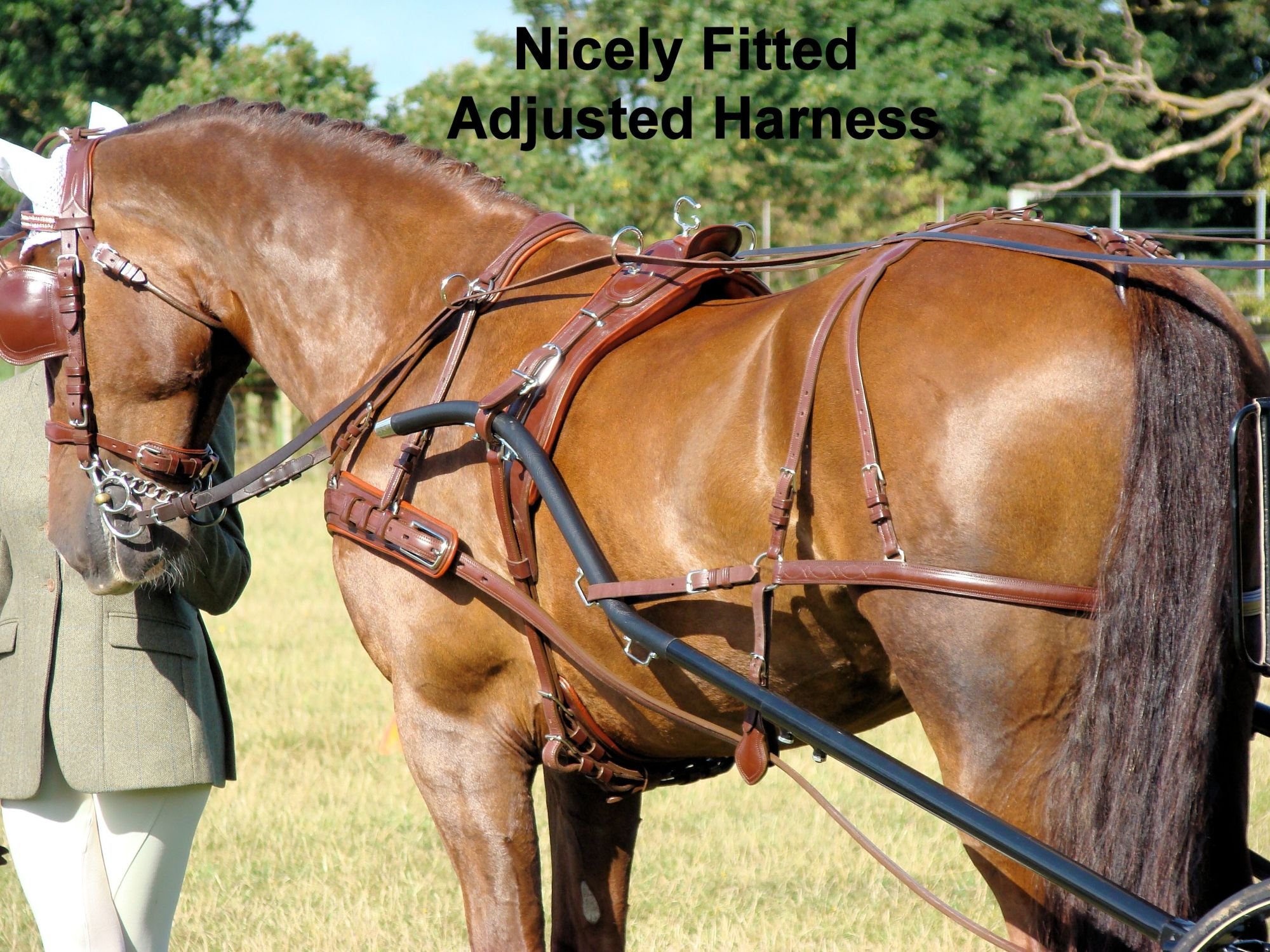 hight resolution of well fitted sized horse harness
