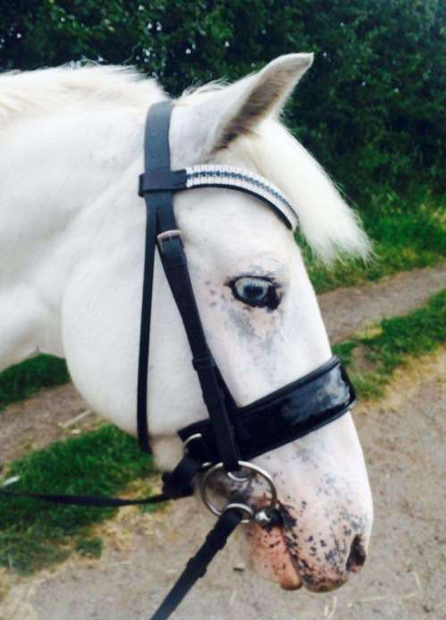 Stunning Bella, 14hh Jumping Pony in a custom made Amazbling bling browband