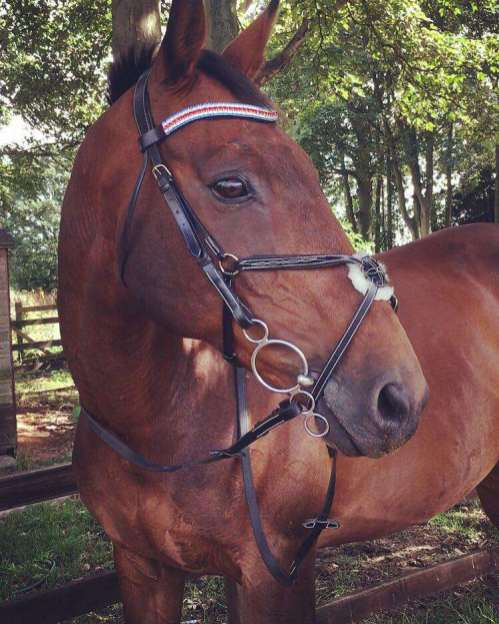 How handsome is this chap in his Bespoke Bling Browband from PonyCouture?