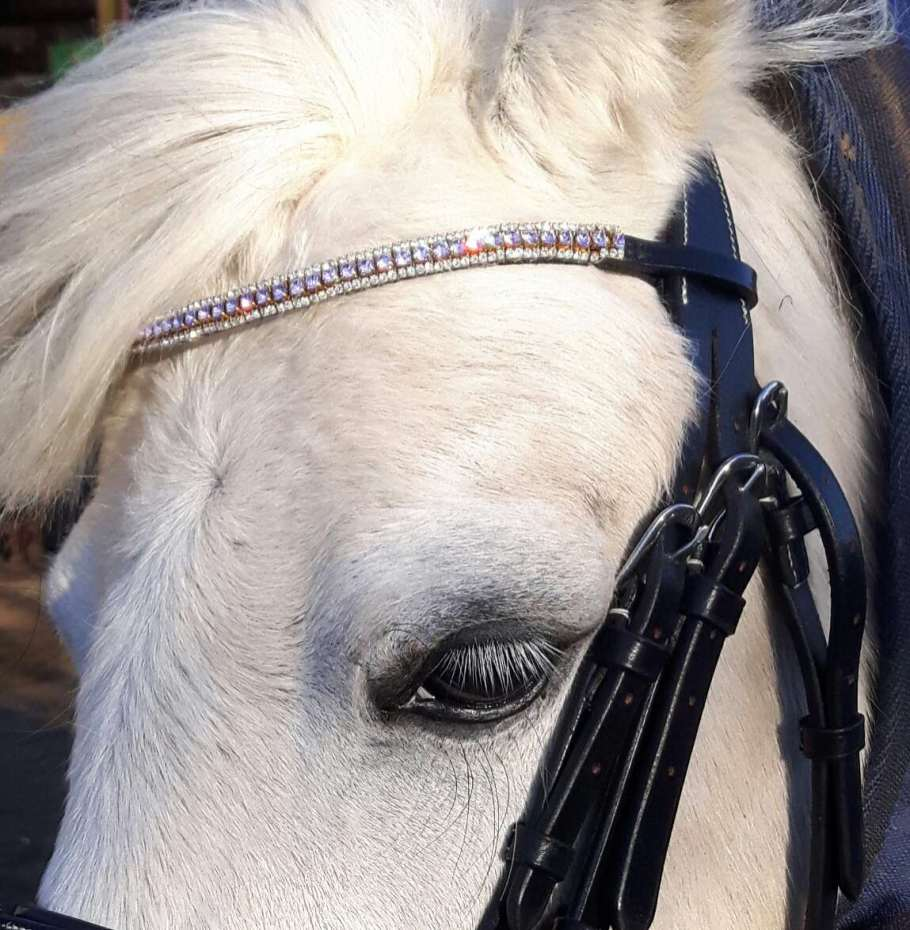11.2 hh welsh section A in stunning handmade crystal bling browband, bling browbands to fit small ponies!