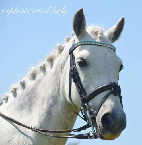 Sophie pony in her bling browband
