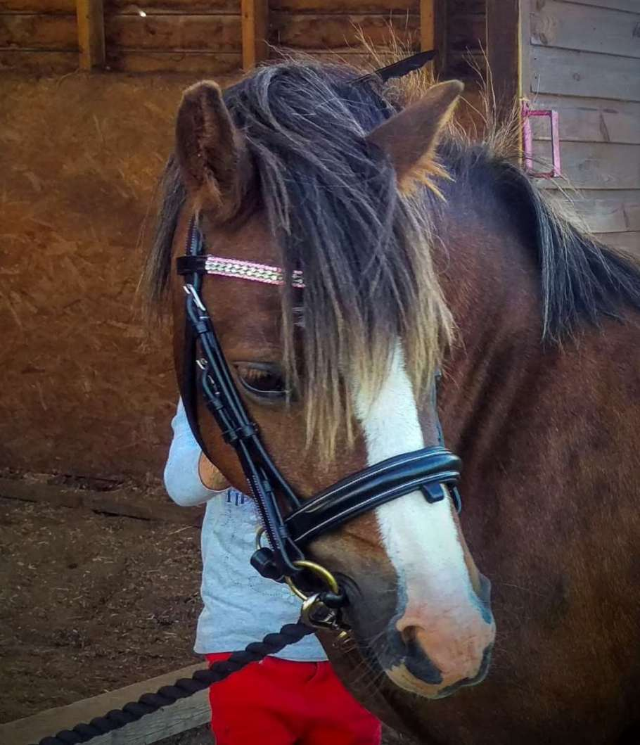 Tegan 11hh Welsh section A mare in a custom checkerboard design bling browband