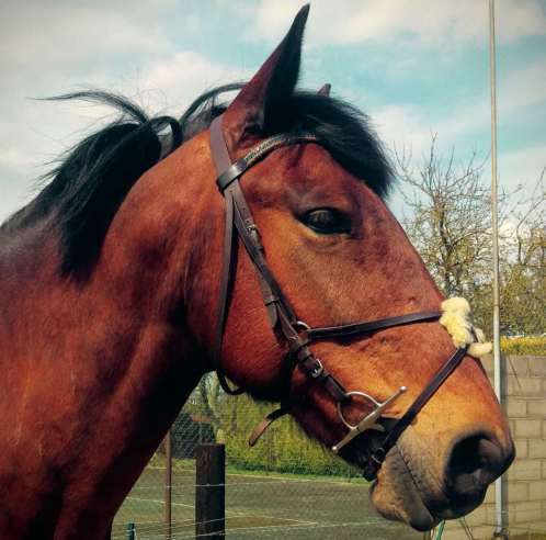 Amazbling bling browband for large horses