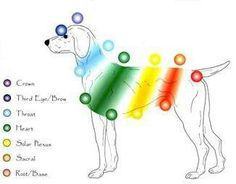 Dog Chakras Image