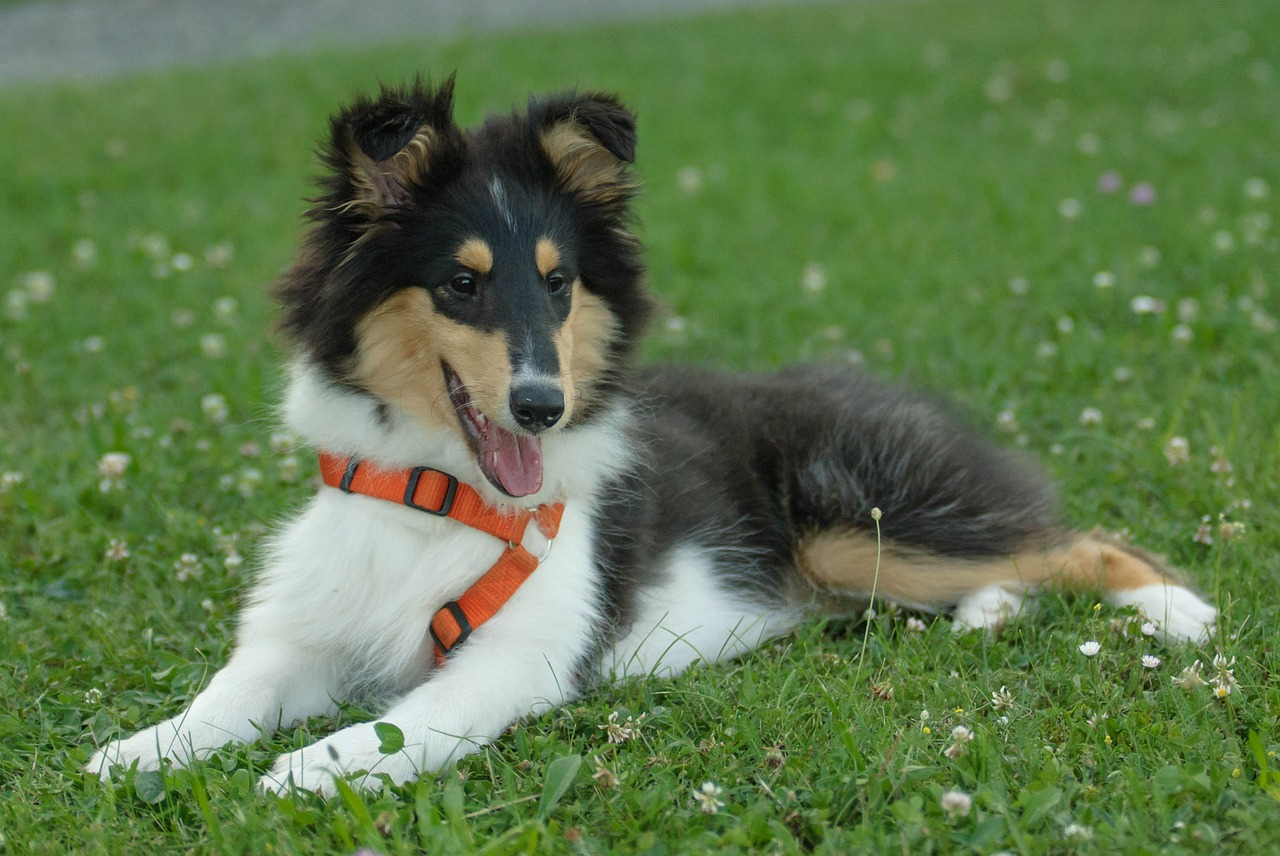 GIFTS FOR DOG LOVERS IN YOUR LIFE- BLOG POST 1-JEWELRY
