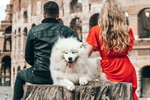 travelling with your dog to europe
