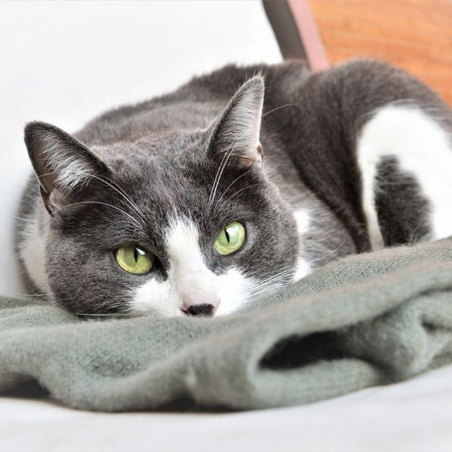 why cats are good companions