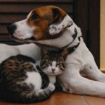 tips to find a pet sitter