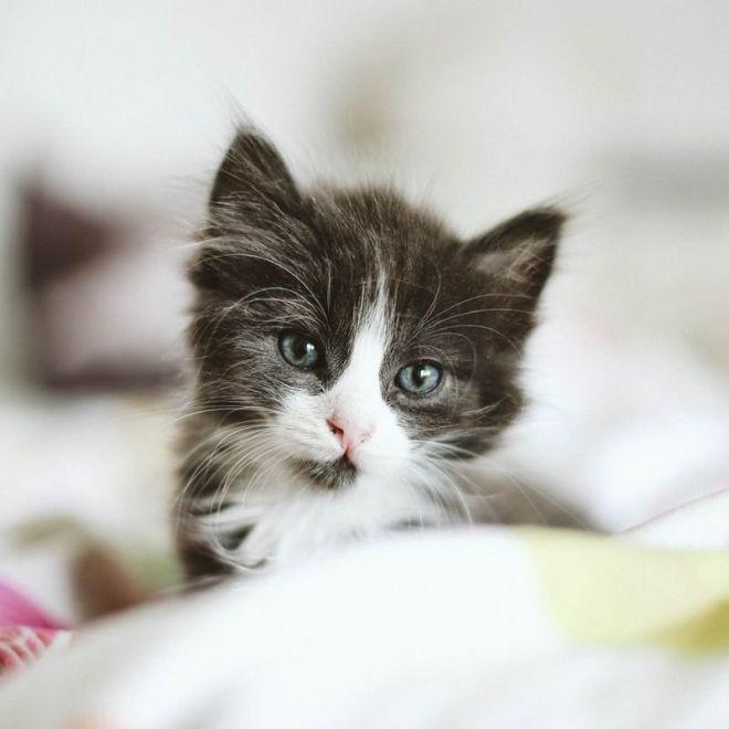 kitten check list essential supplies