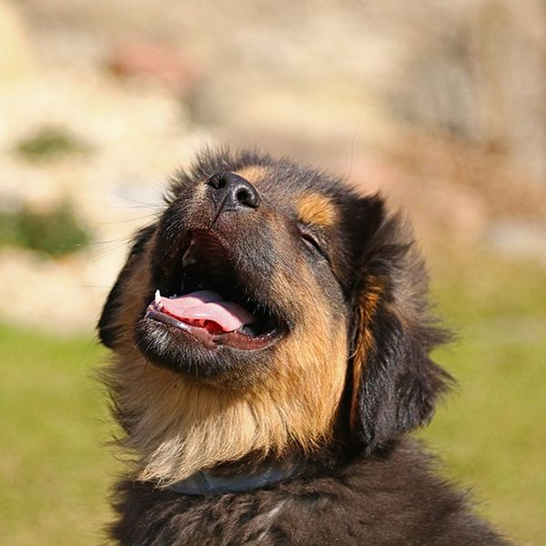how to improve your dog's lifespan