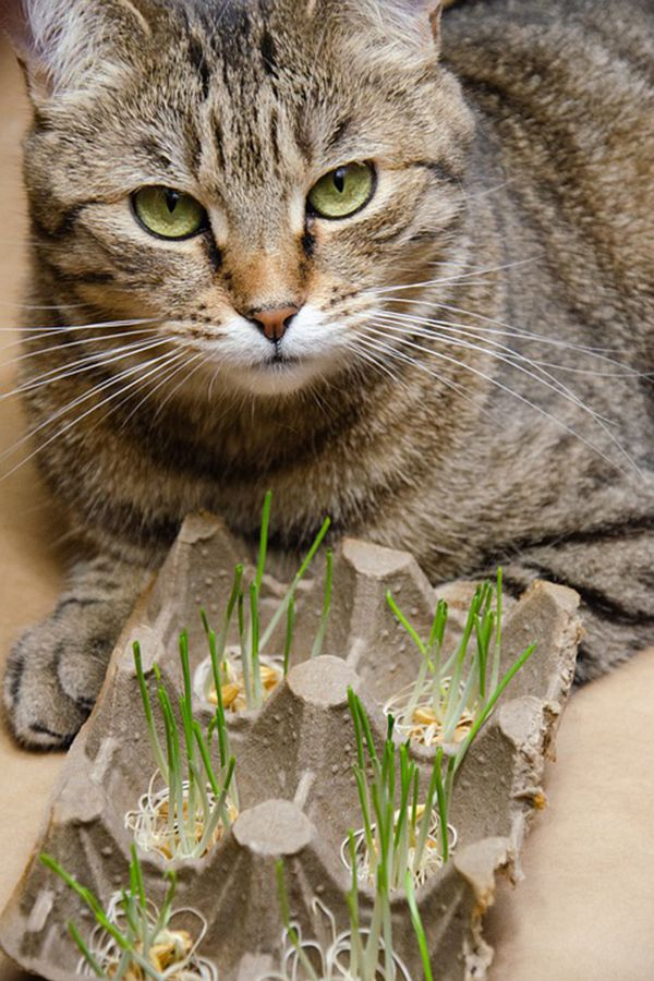 why do cats like catnip so much
