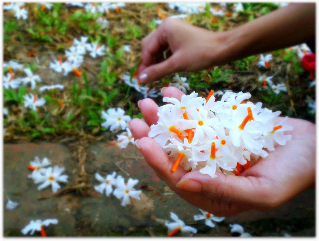 pooja with parijata flowers