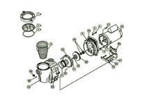Buy Pool Pumps, Spa Pumps, Pool Motor, Pond Pumps Online