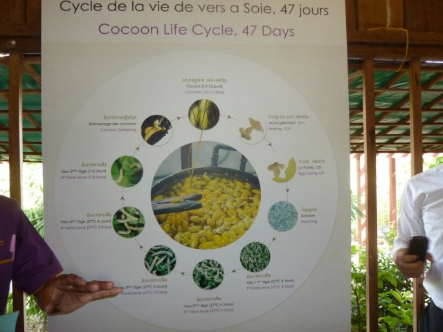 Poster - Life Cycle of the Silk Worm