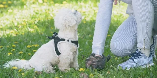 How to Get Rid of the Smell of Dog Poop in Your Yard ...