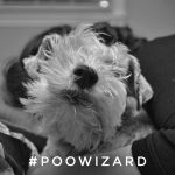 Dog sitter and pet photographer, Truro dog walker, poo wizard