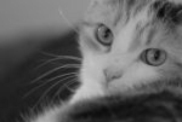 truro cat sitter and cat photographer