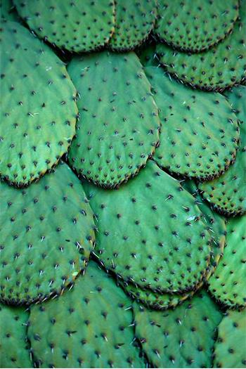 mood-cactus_27