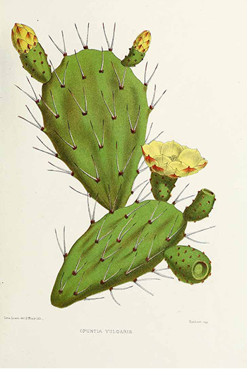 mood-cactus_63